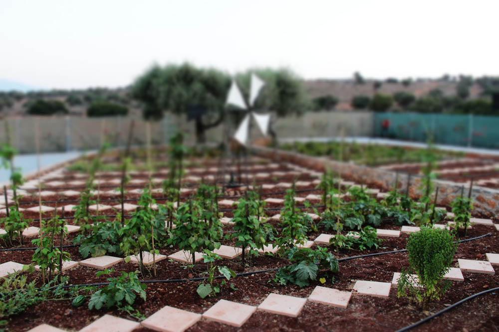 eco_garden.jpg