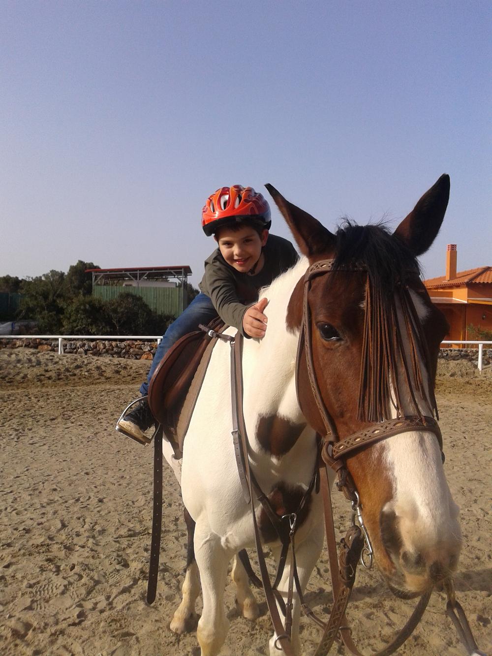 horse_(1).jpg