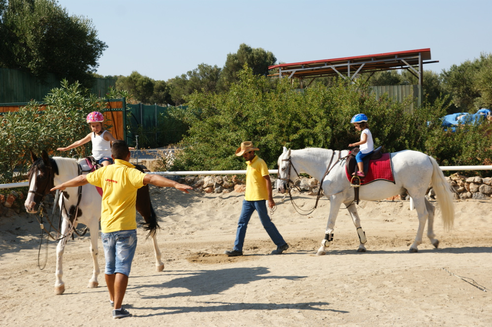 horse_(4).JPG