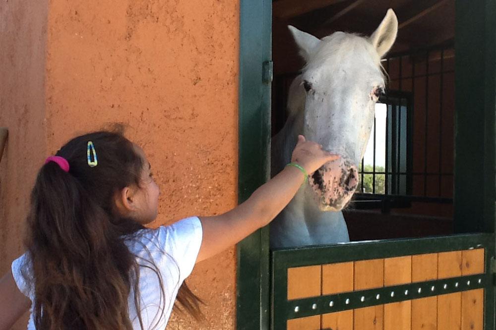 horse_(6).jpg